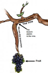 I am the vine - You are the branches